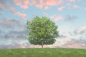 Curso Adaptación ISO 14001:2015